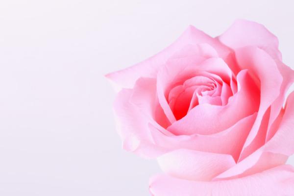 gezichtsmasker rozen