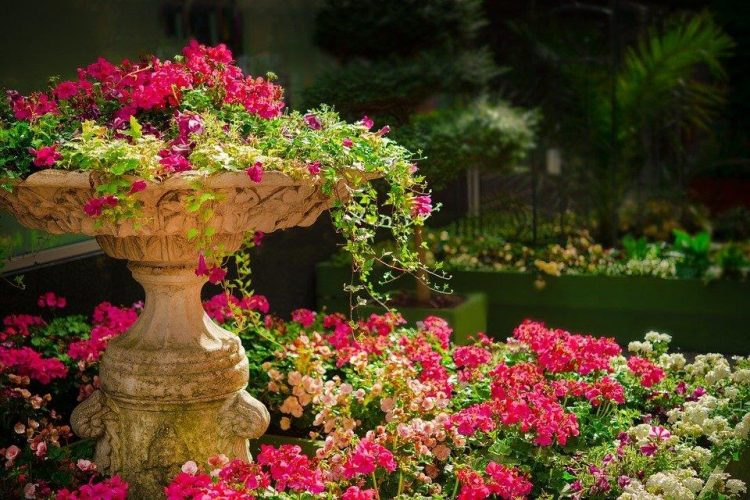 Planten in je tuin